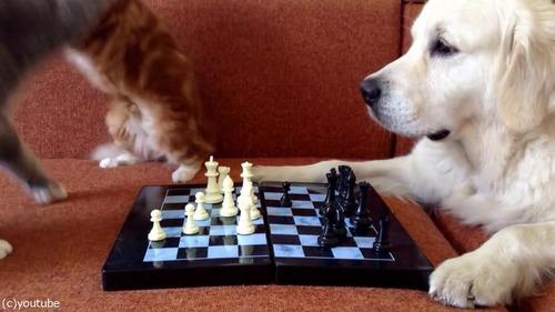猫がチェスの審判をすると…07