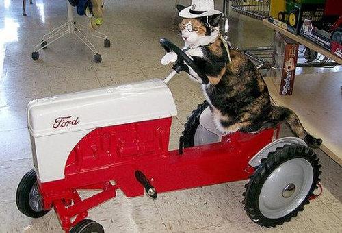 猫と乗り物04