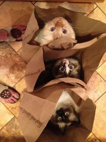 07箱や入れ物に収まった動物たち