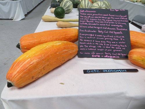 800年前のかぼちゃの種03