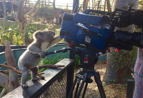 カメラマンな動物12