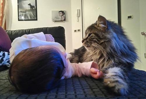 女の子を守る猫03
