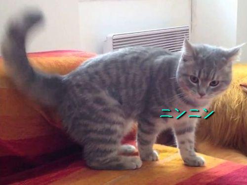 ニンジャ猫00