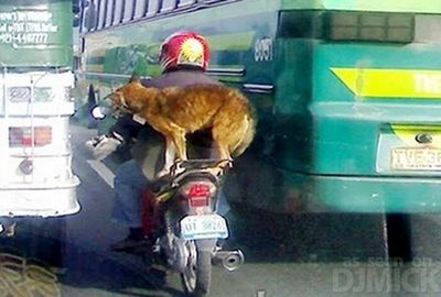 自転車やバイクに乗る犬たち01