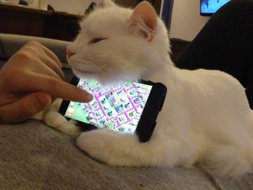 猫のスマートフォンスタンド00