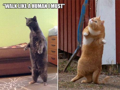 おかしな猫たち21