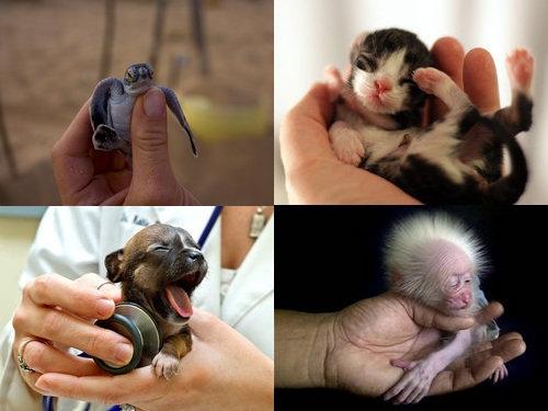 手乗りの動物赤ちゃん00