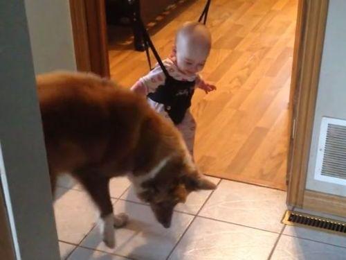 赤ちゃんにジャンプのしかたを教える犬01