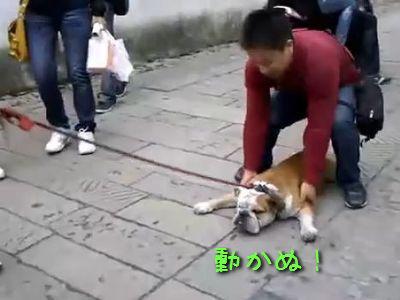 微動だにしない犬