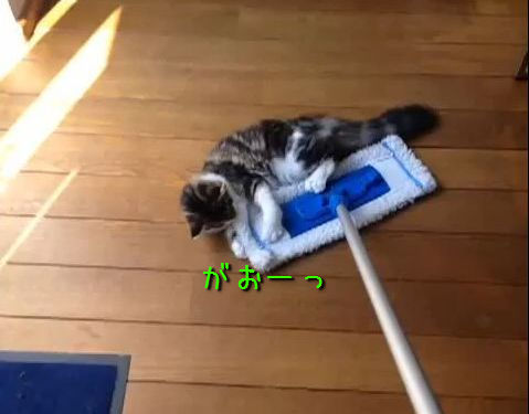 クイックルワイパーと猫00