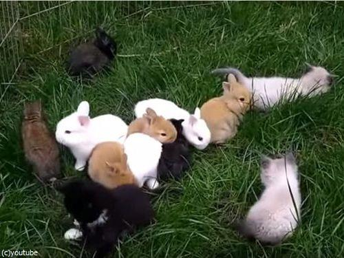 子猫と子ウサギ03