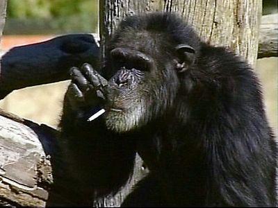 リッチなチンパンジー00