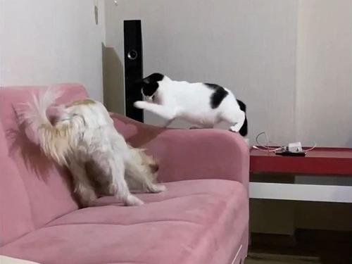 犬を懲らしめる猫00