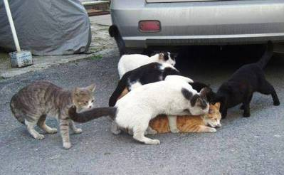 猫まみれ01