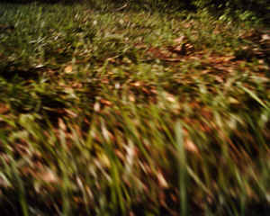 ネコ視点ではこう見える!ネコにカメラをつけて撮影06