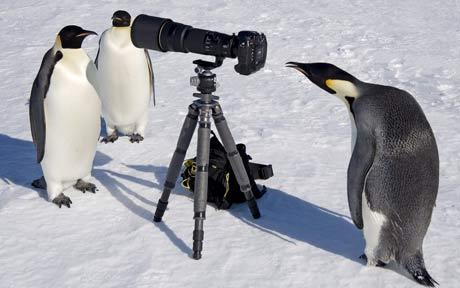 野生動物の写真撮影のオーディションに落ちたとき02