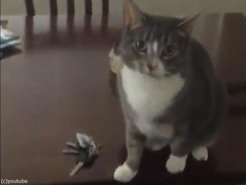 キーを守る猫02