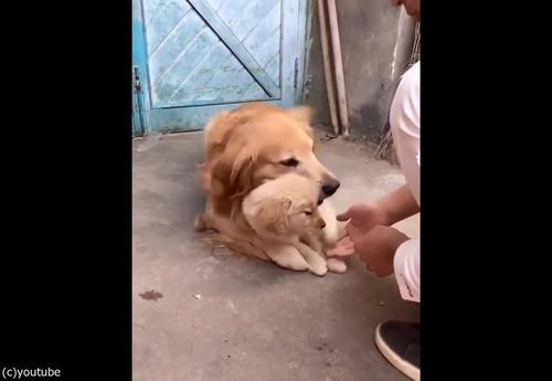 過保護な犬05