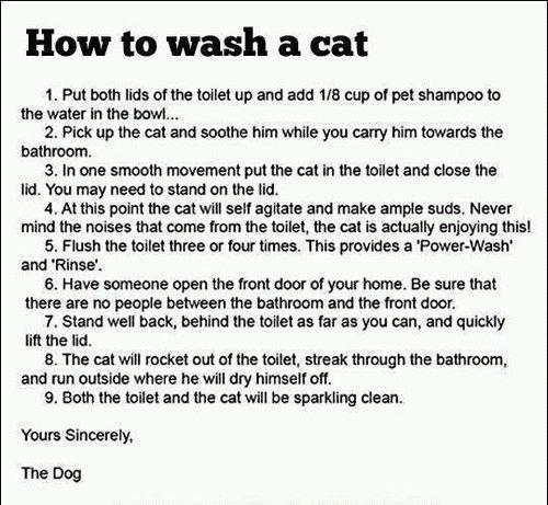 猫の洗い方01