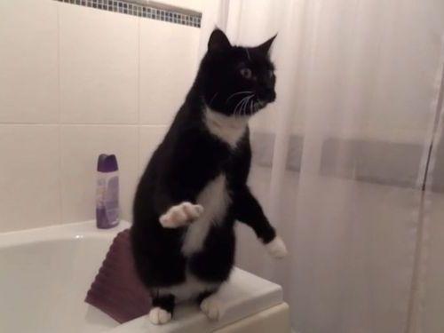 鏡の前でポーズする猫01