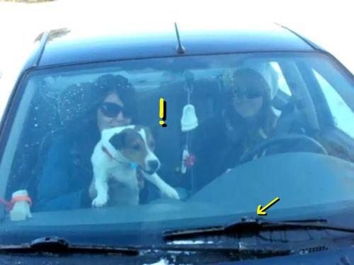 ワイパーと犬