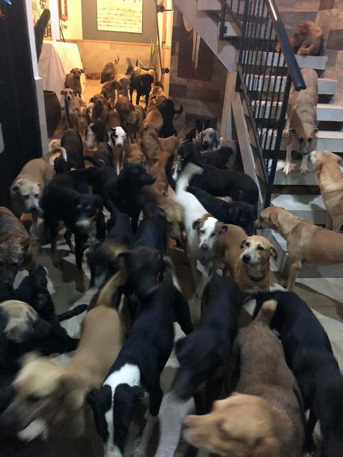 ハリケーンで300匹の犬を自宅で保護03