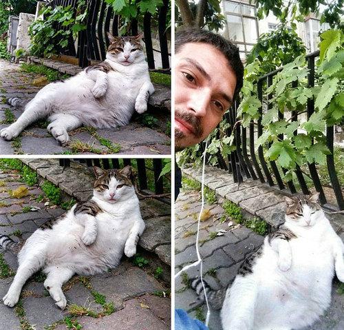 クールな猫の銅像が建つ06