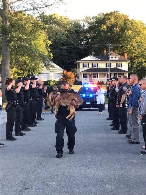 安楽死の前に敬礼される警察犬01