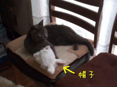 コスプレ好きの猫