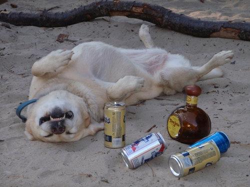 仰向けの犬10