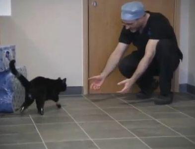 義足の猫オスカー02
