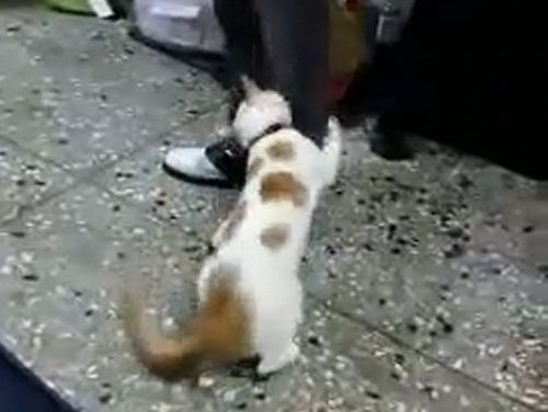 ケンカを止める猫01
