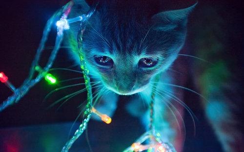 猫が狙っているもの08