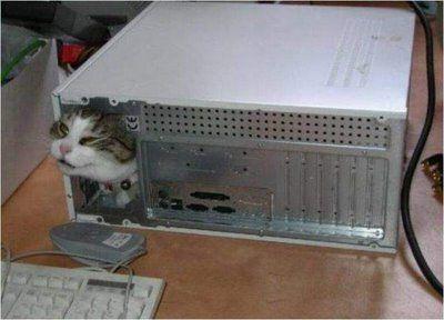 寒がり猫13
