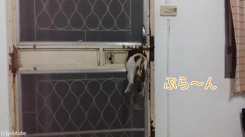 ドアから脱出する猫05