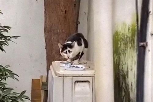 困り顔の猫05