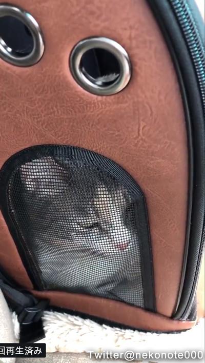 病院に連れていかれる猫02