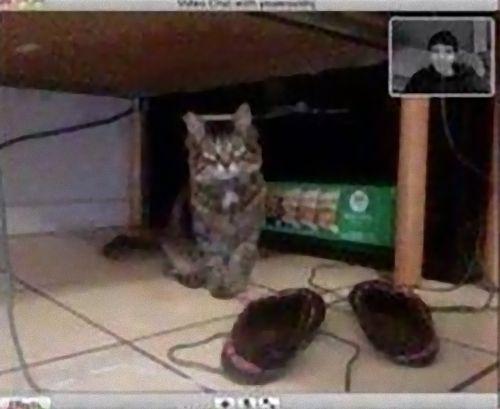 ビデオチャットで猫が自分を認識してくれた01