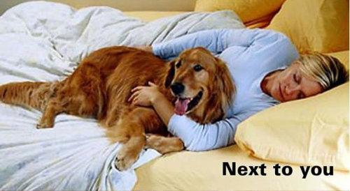 犬の寝場所06