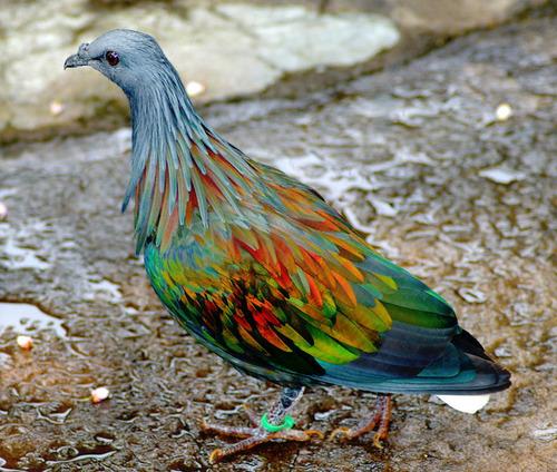 ロンドンで虹色のハトを見た07