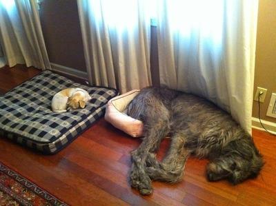 犬の寝床01
