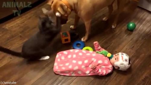 赤ちゃんに蹴られた猫、犬に八つ当たり03