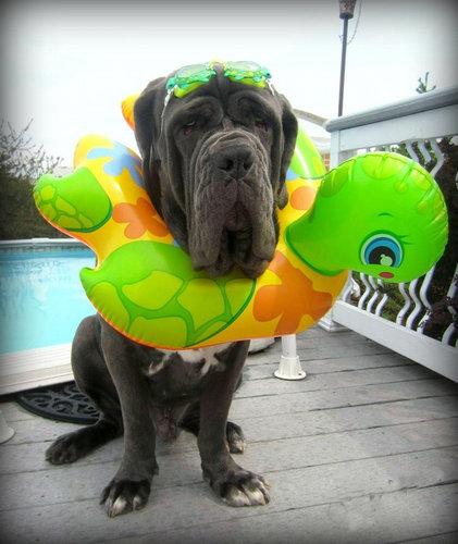 大きな犬のトラブル03