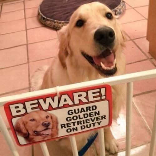 猛犬注意…と思ったら違う例02