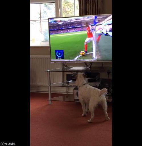 サッカーと犬02