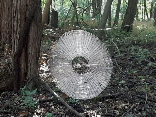 人間も引っかかりそうな壮大なクモの巣01