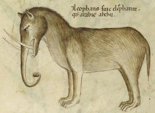 中世の想像で描かれたゾウ03
