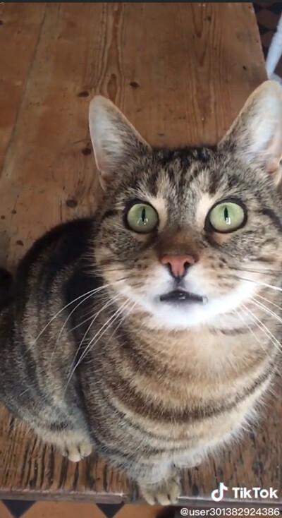 穴の中をのぞき込む猫…ちょっと怖いけどかわいい05