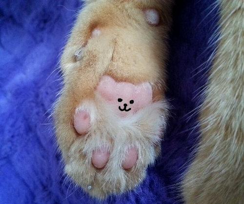 猫の肉球にテディベア04