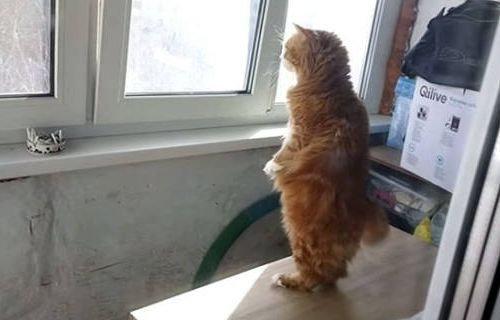 自分を人間だと思ってる猫10